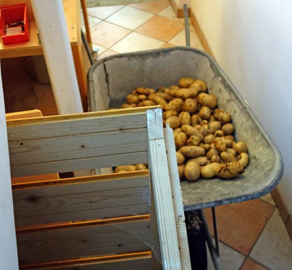 Kartoffeln sind bereit verstaut zu werden