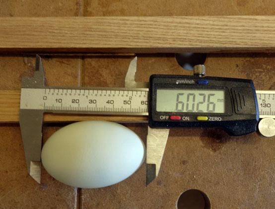 Welchen Länge haben in etwa meine Eier?