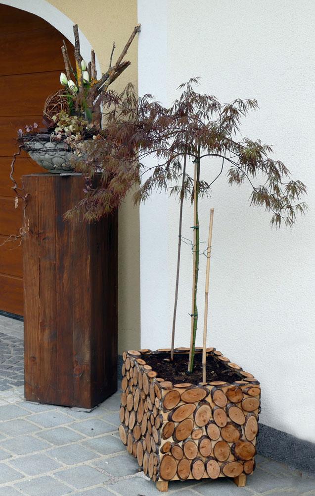 Dekorativer Pflanztrog mit Ahornbäumchen