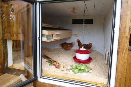 Hühnerorientierung