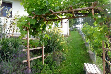 Traggerüst für Weinreben im Sommer